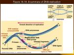 figure 16 16 a summary of dna replication19