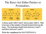the bases are either purines or pyrimidines