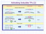 activating inducible tfs 2