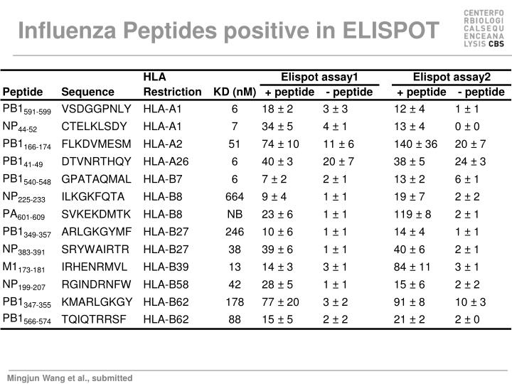 Influenza Peptides positive in ELISPOT