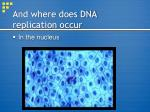 and where does dna replication occur
