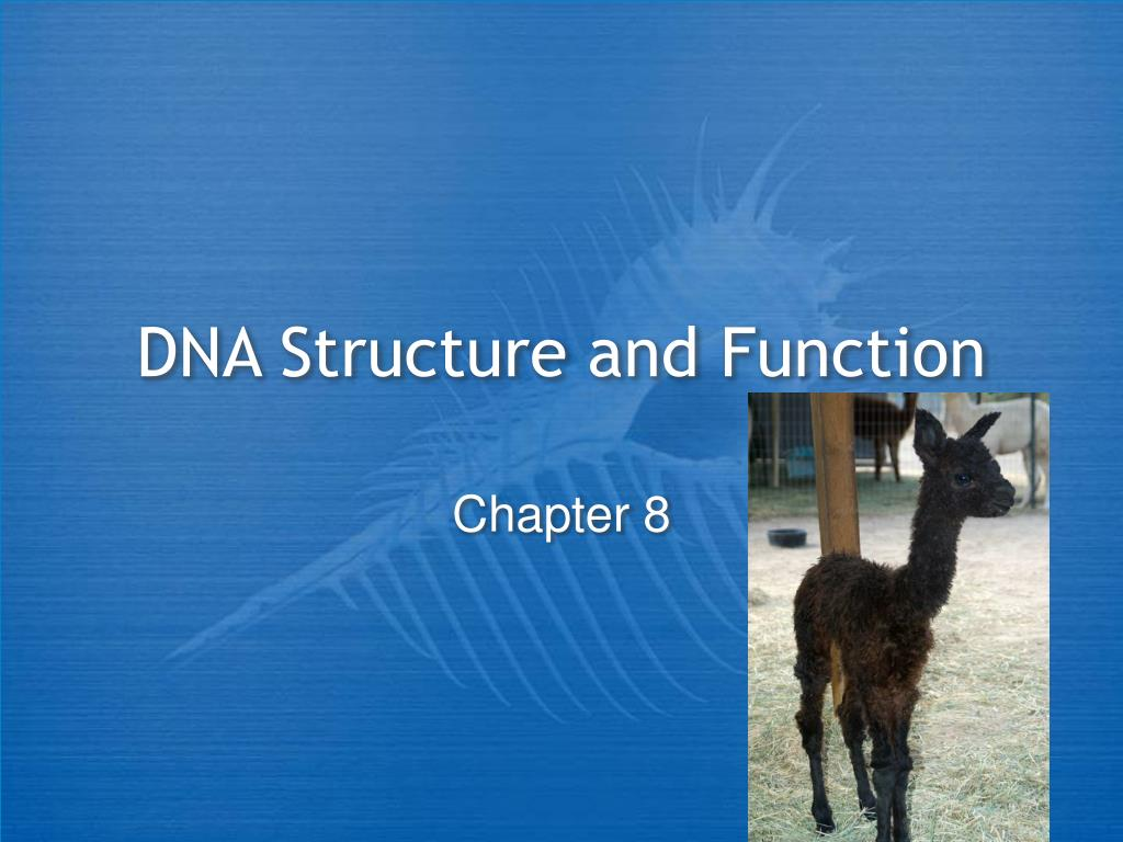 dna structure and function l.