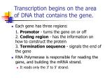 transcription begins on the area of dna that contains the gene