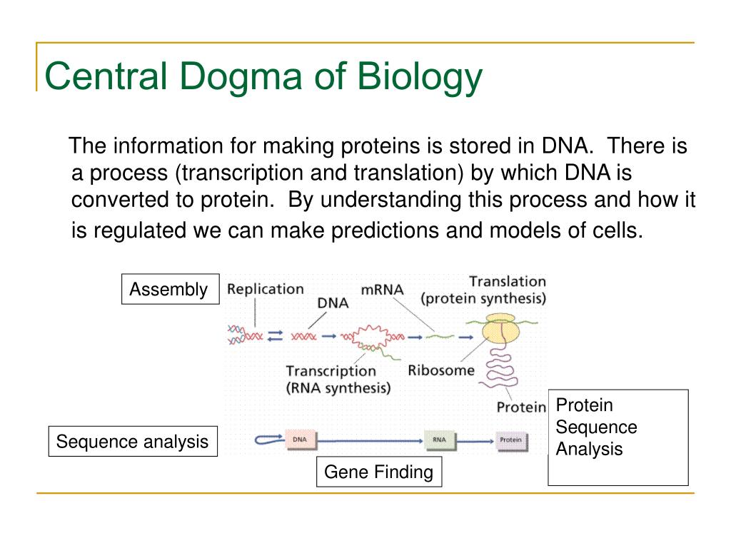 Central Dogma of Biology