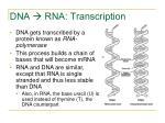 dna rna transcription