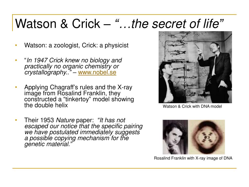 Watson & Crick with DNA model