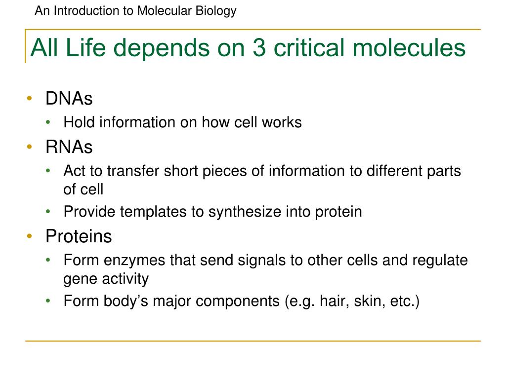 All Life depends on 3 critical molecules