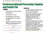 posttranscriptional processing capping and poly a tail