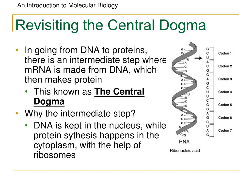 Revisiting the Central Dogma