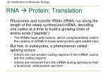 rna protein translation