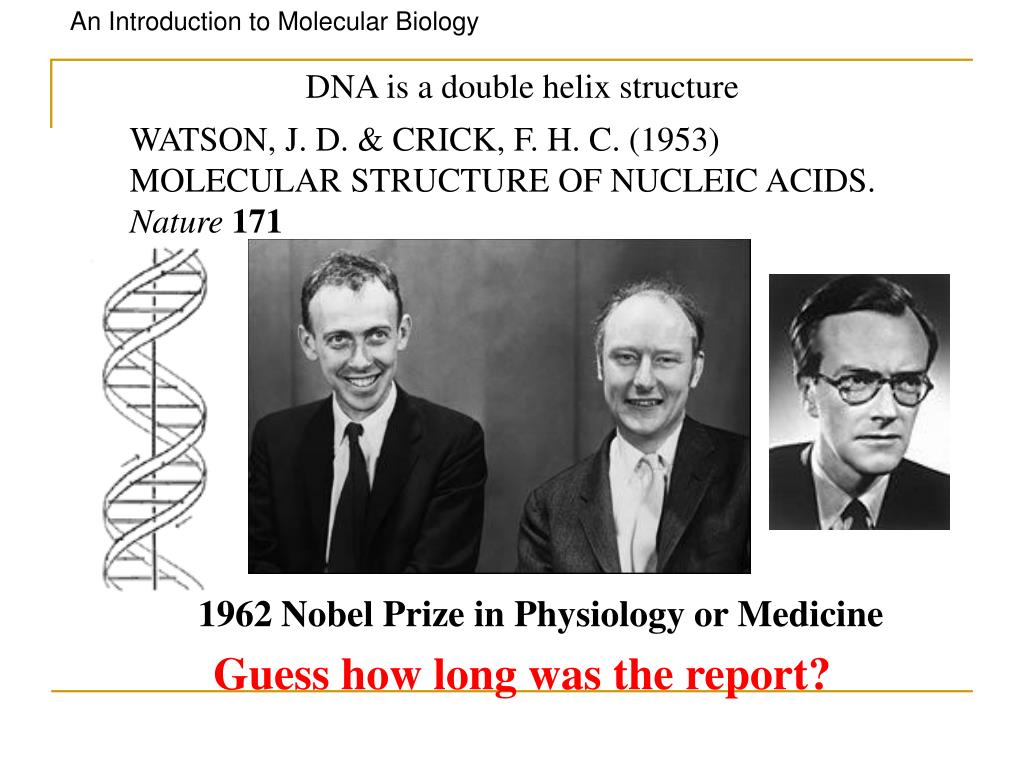WATSON, J. D. & CRICK, F. H. C. (1953) MOLECULAR STRUCTURE OF NUCLEIC ACIDS.