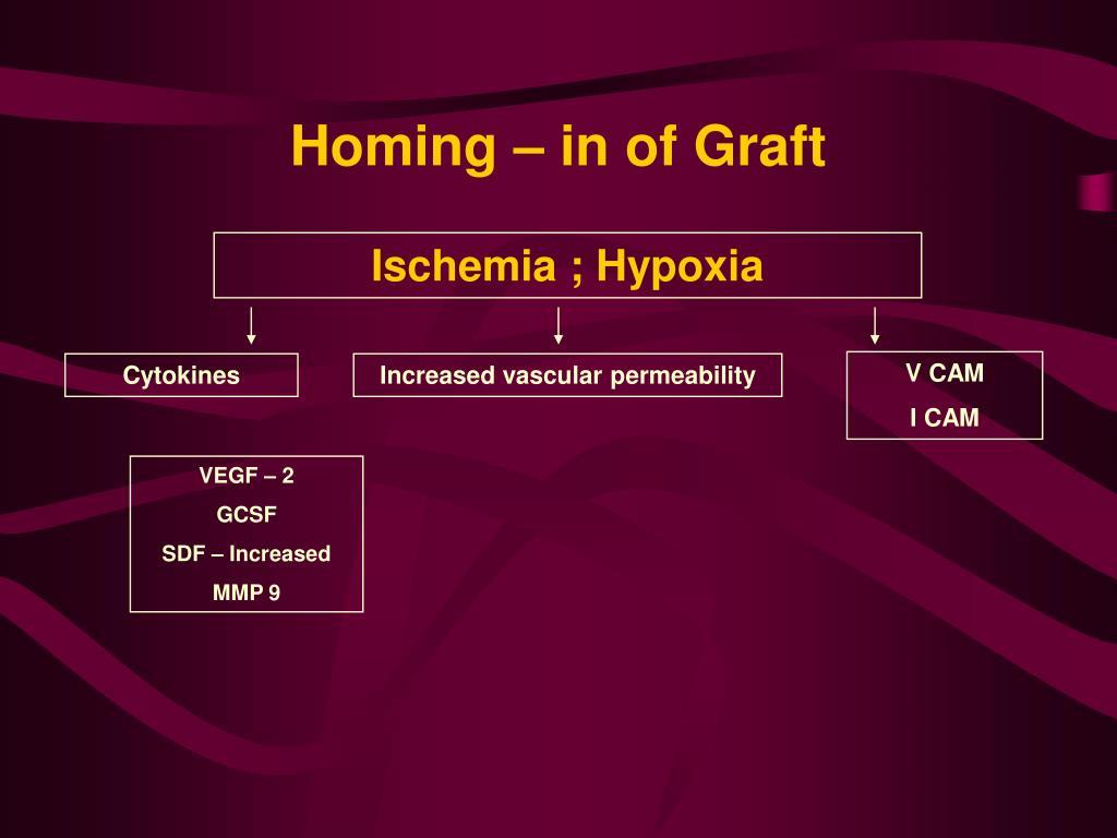 Homing – in of Graft