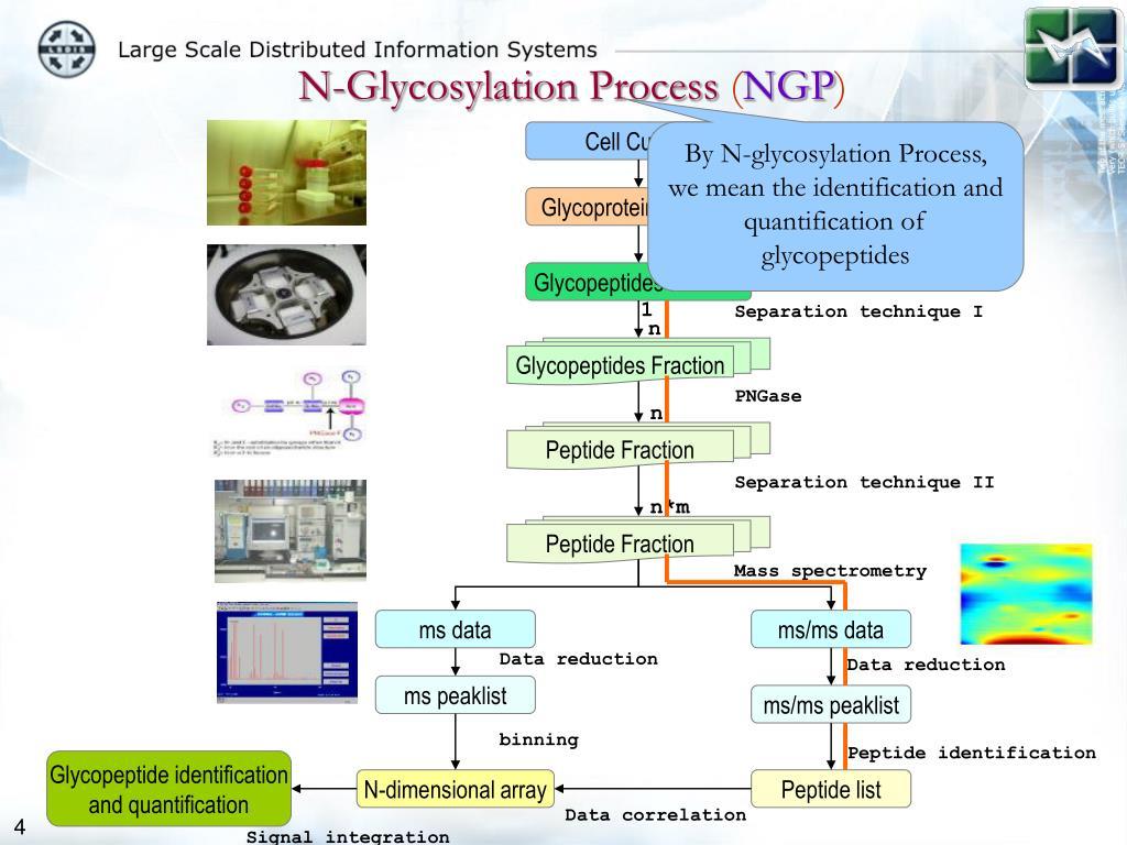 N-Glycosylation