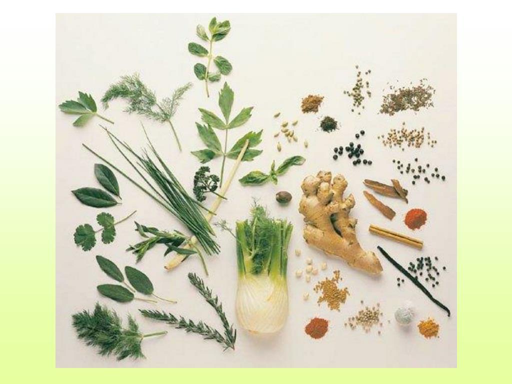 herbs l.