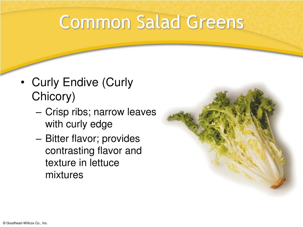 Curly Endive (Curly Chicory)
