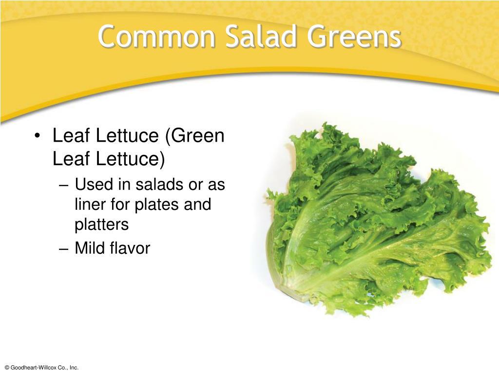 Leaf Lettuce (Green Leaf Lettuce)