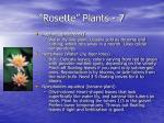 rosette plants 7