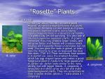rosette plants