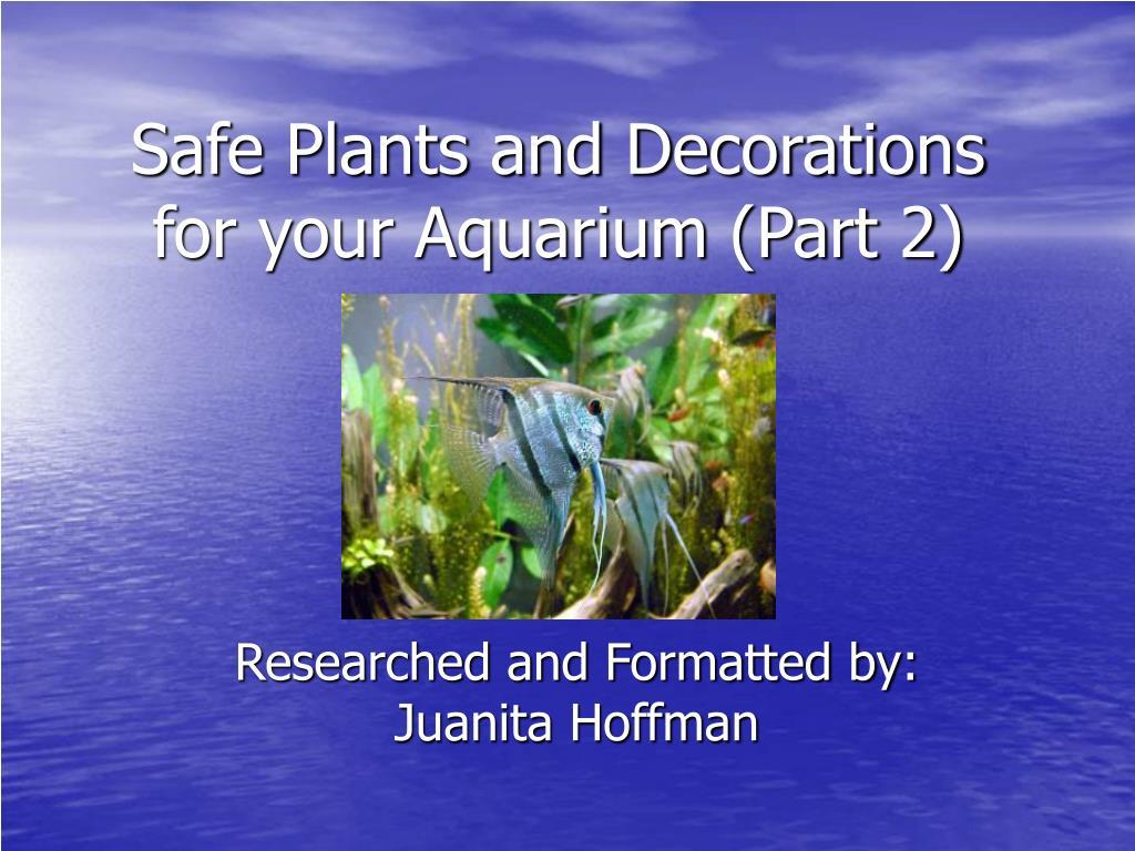 safe plants and decorations for your aquarium part 2 l.