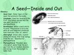 a seed inside and out