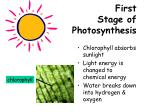 first stage of photosynthesis
