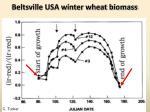 beltsville usa winter wheat biomass