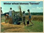 winter wheat biomass harvest