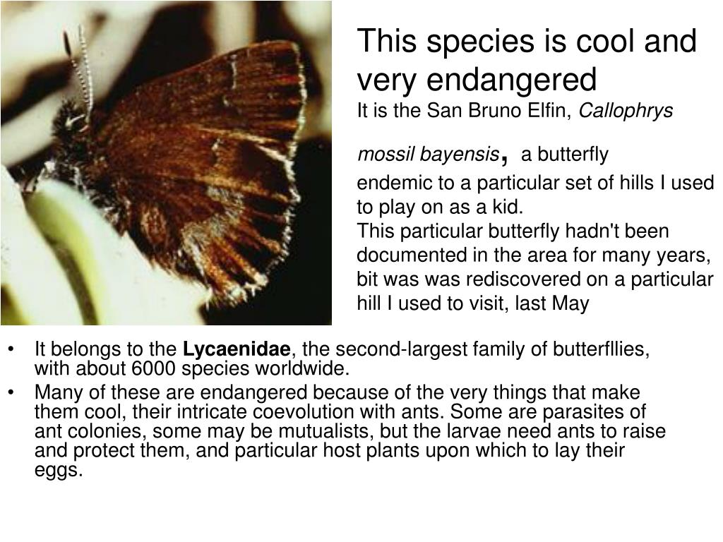 This species is cool and very endangered