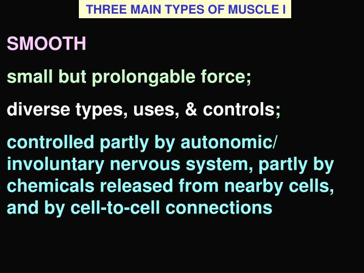 THREE MAIN TYPES OF MUSCLE I