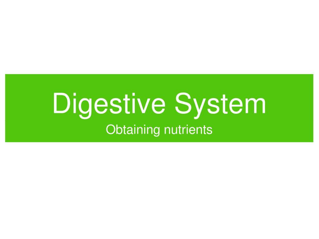 digestive system l.