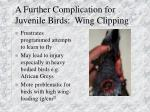 a further complication for juvenile birds wing clipping