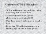 attributes of wild psittacines