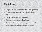 gyrfalcons