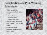 socialization and post weaning psittacines