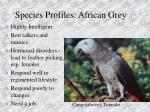 species profiles african grey