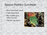 species profiles lovebirds