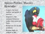 species profiles macaws hyacinths