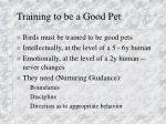 training to be a good pet