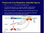 prokaryotic gene regulation inducible operon