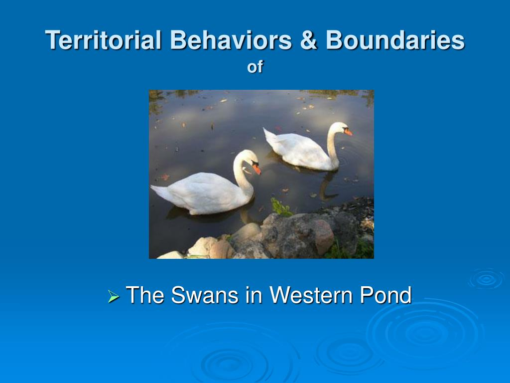 territorial behaviors boundaries of l.