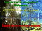 tour the tropical rainforests of palawan