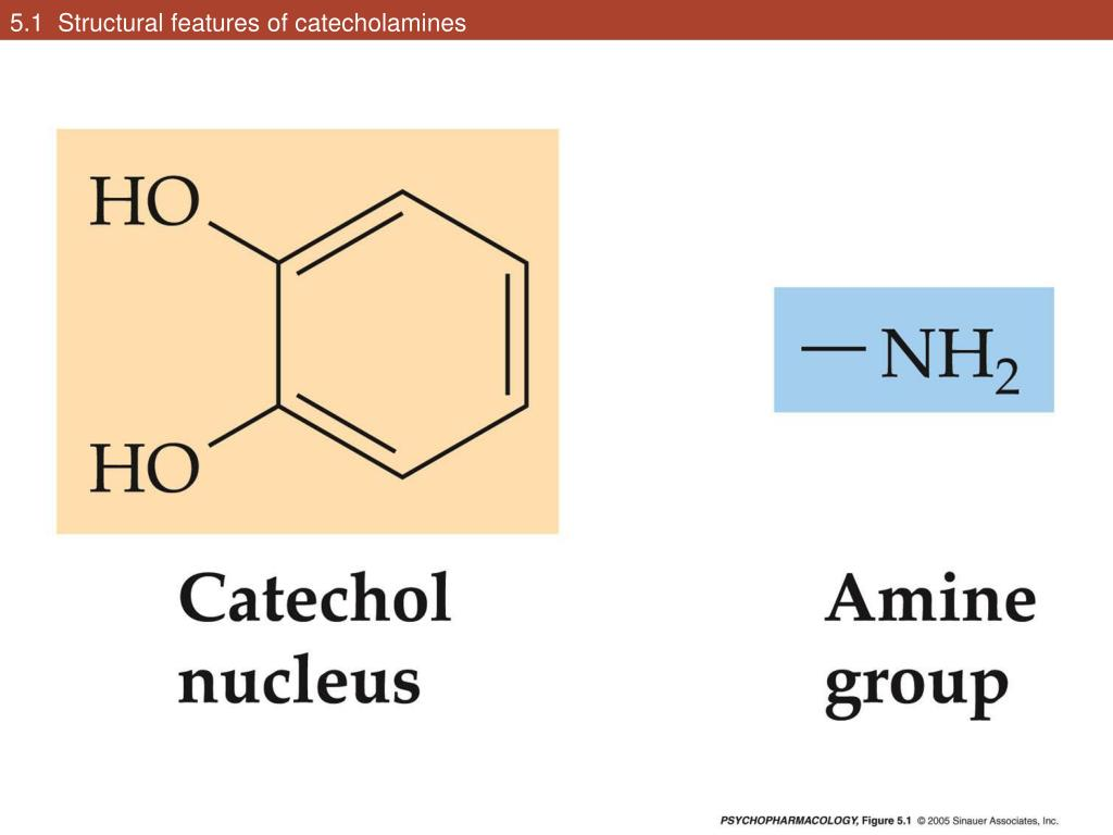 5.1  Structural features of catecholamines