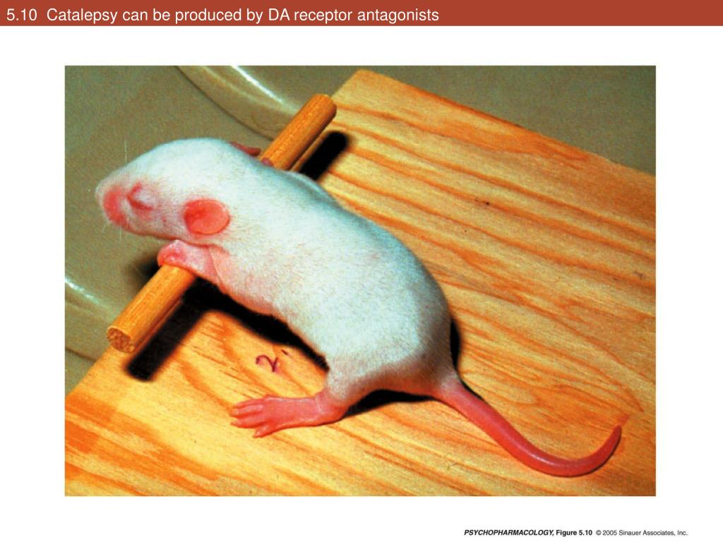 5.10  Catalepsy can be produced by DA receptor antagonists