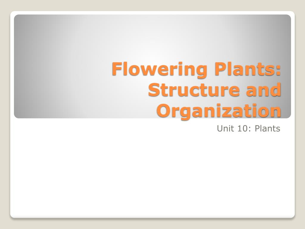 Flowering Plants: Structure and Organization