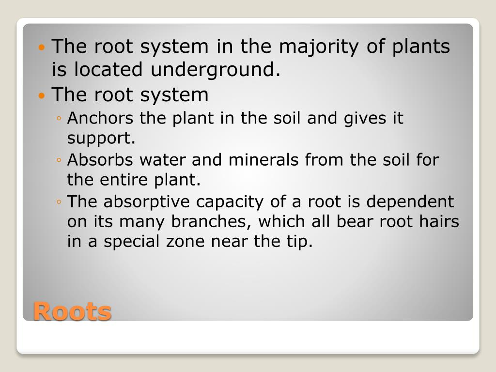 The root system in the majority of plants is located underground.