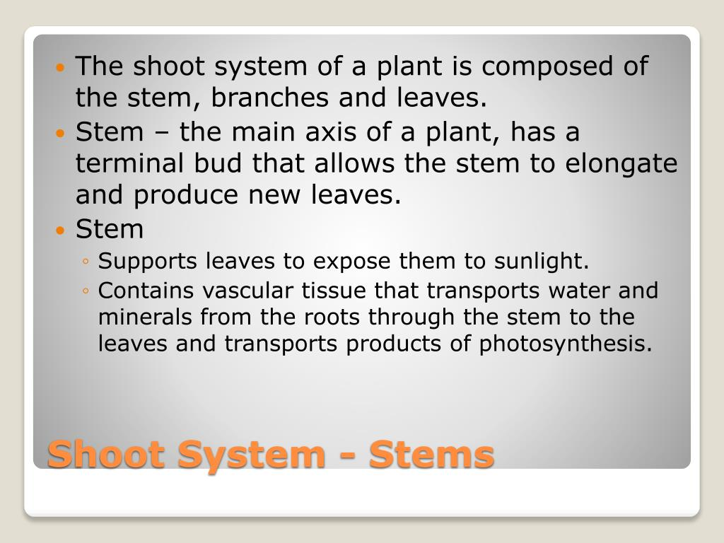 The shoot system of a plant is composed of the stem, branches and leaves.