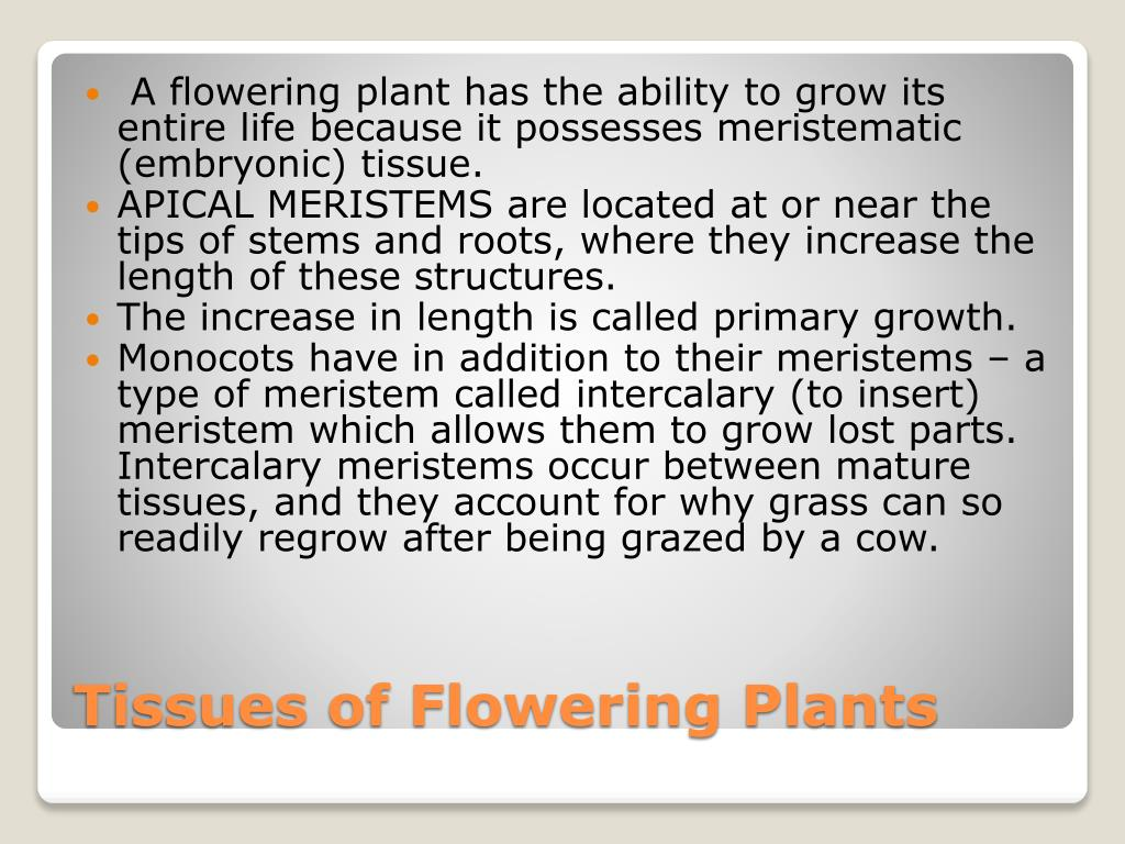 A flowering plant has the ability to grow its entire life because it possesses