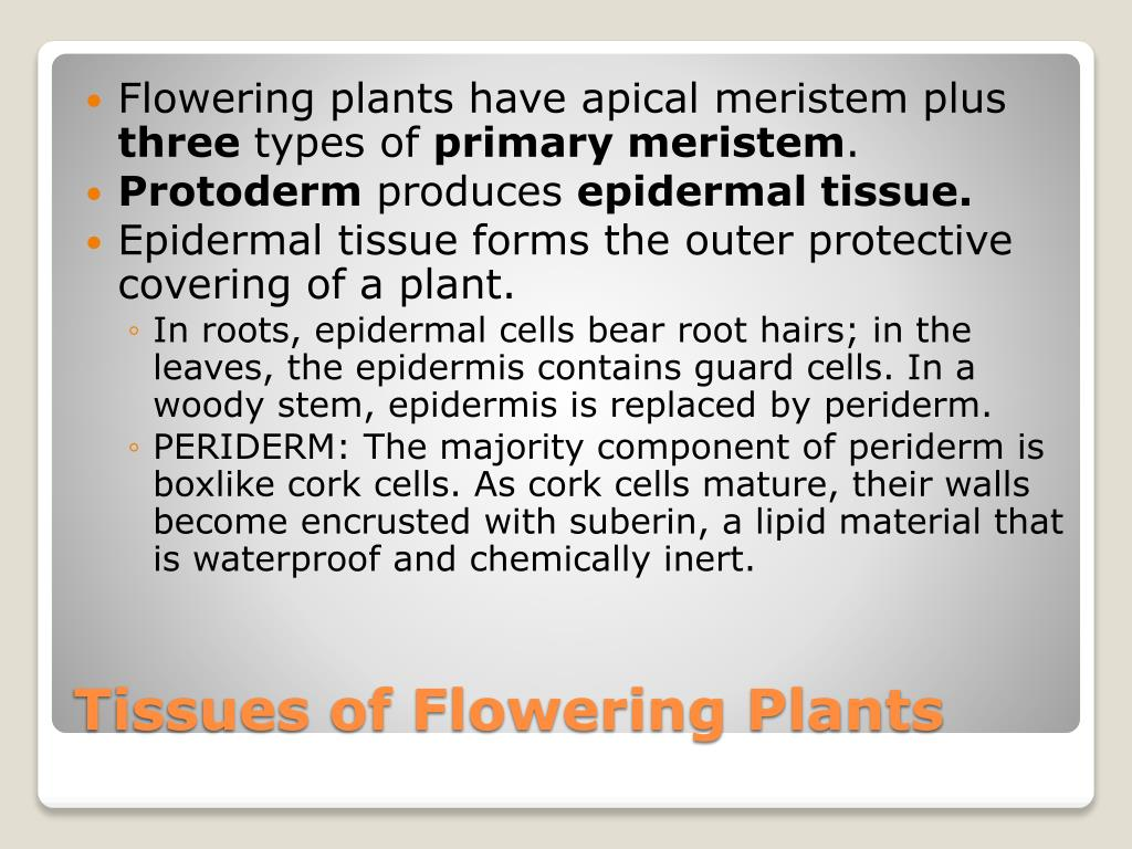 Flowering plants have apical