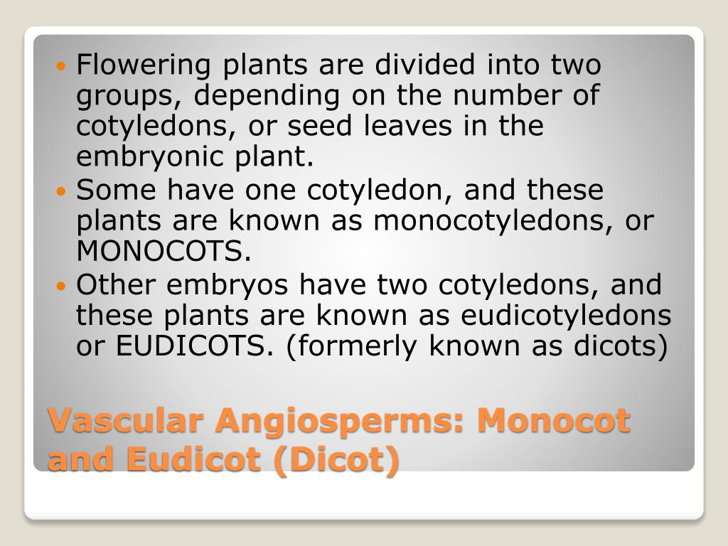 Flowering plants are divided into two groups, depending on the number of cotyledons, or seed leaves in the embryonic plant.