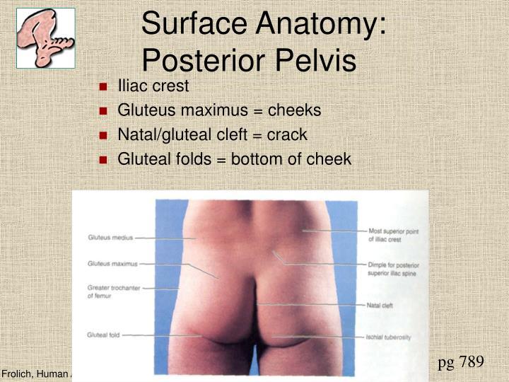 PPT - Lower Limb PowerPoint Presentation - ID:30296